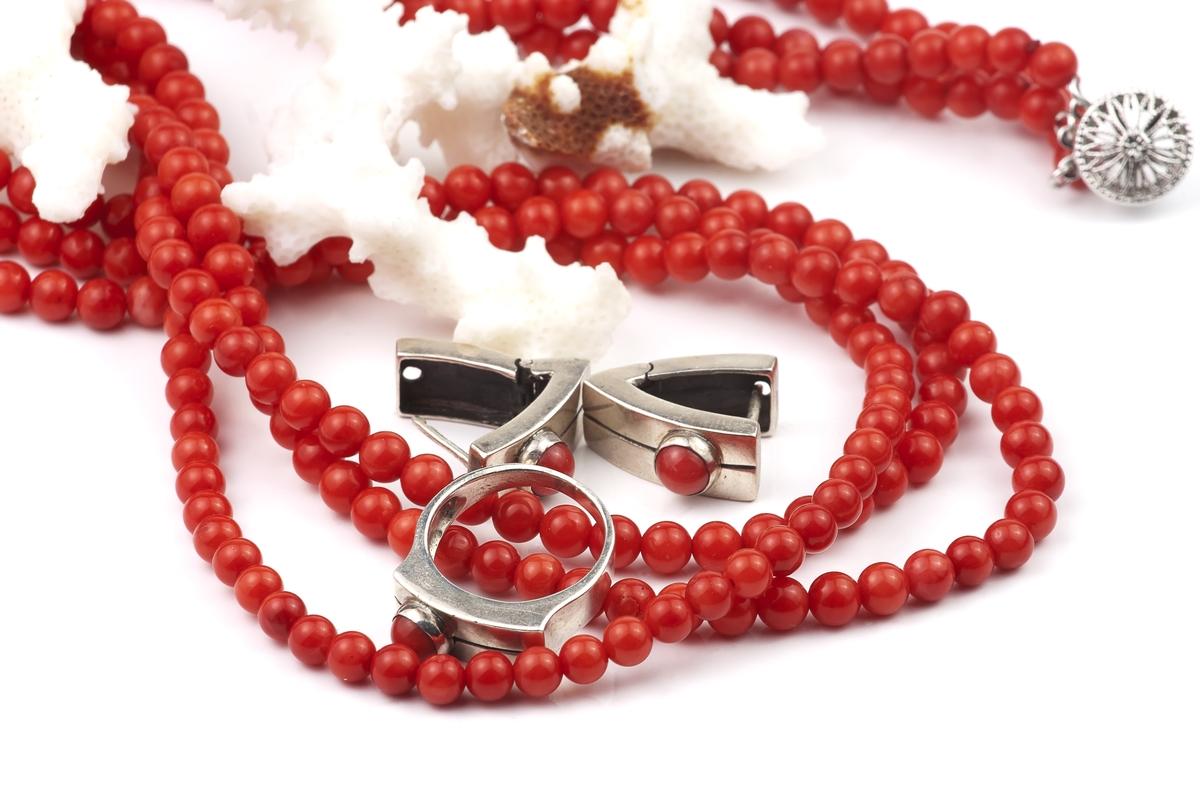 血赤珊瑚1