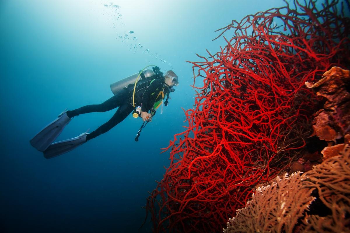 血赤珊瑚3