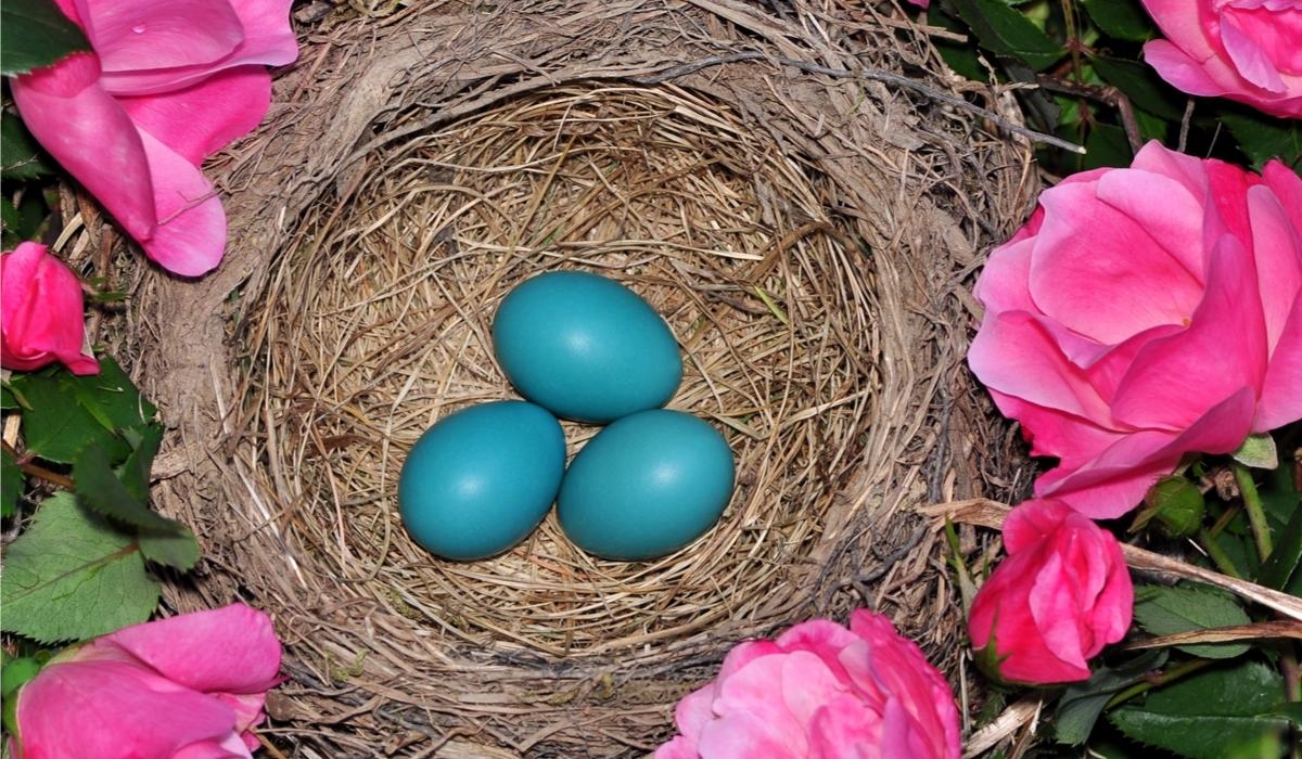 ロビンの卵